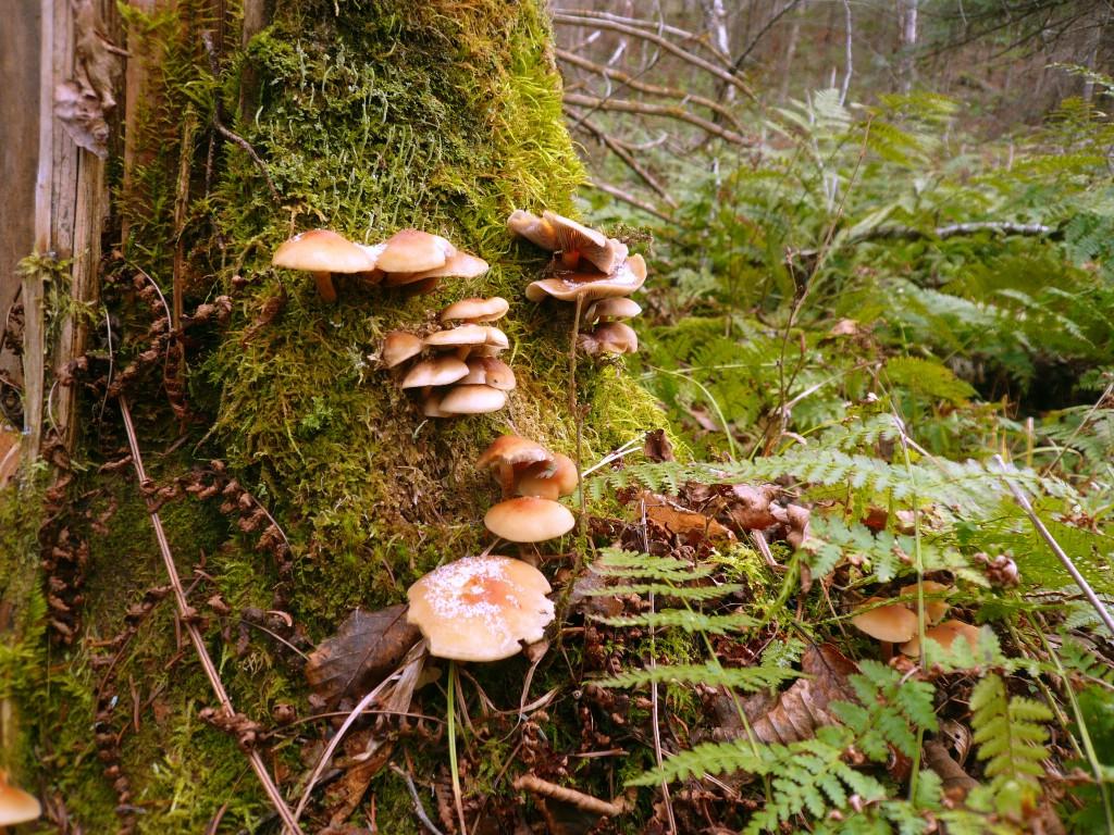 Setas en el Jaques Cartier National Park.